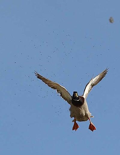 httpswww.outdoorlife.comsitesoutdoorlife.comfilesimport2014importImage2008legacyoutdoorlifetower_shots_8.jpg