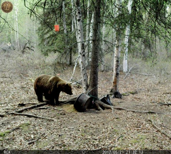 Live Hunt AK: The Grizzly-Proof Trail Camera