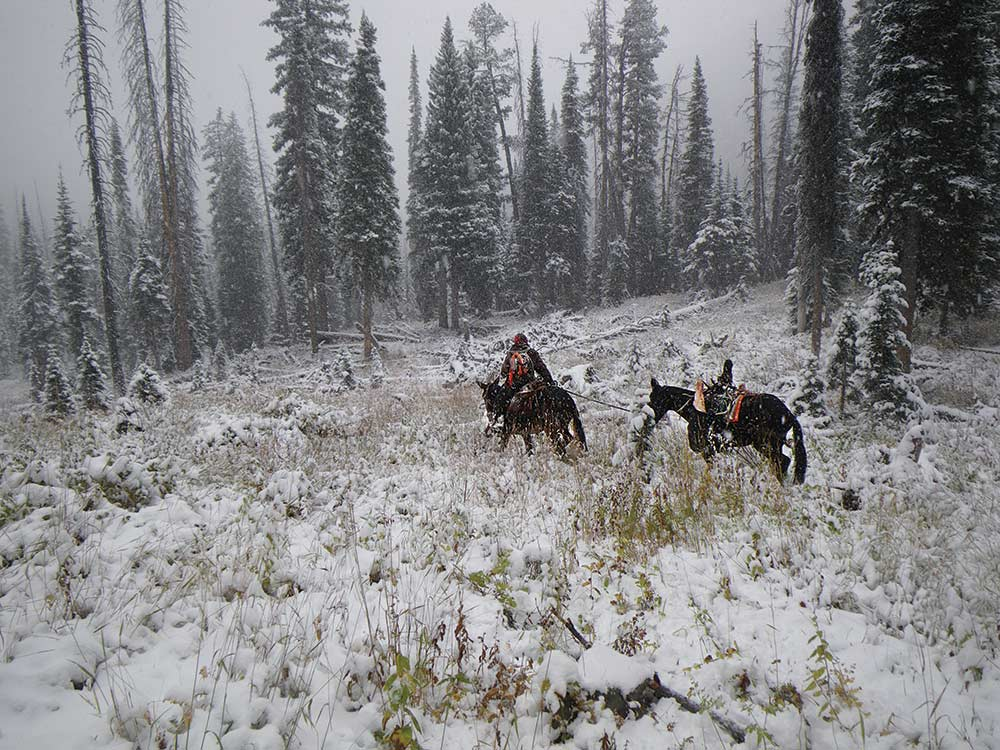 hunter and pack horse hauling elk through snowy forest