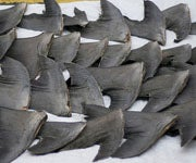 New Research Indicates Shark Fin Soup Could Be Linked to Alzheimer's Disease