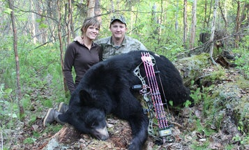 10 Myths About Hunting Bears Over Bait
