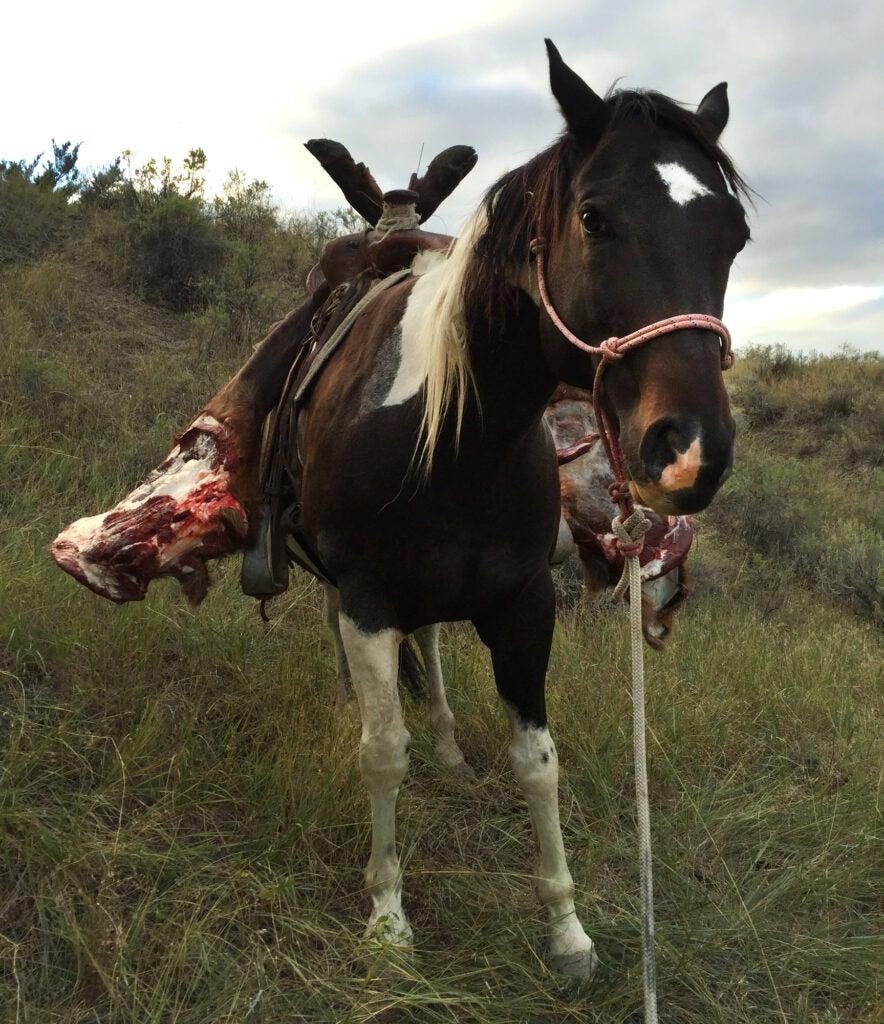 packhorse-elk-meat-quarter-hunting