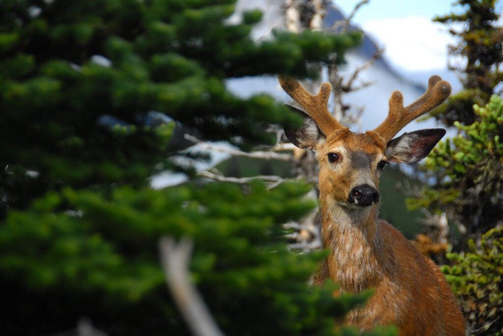 httpswww.outdoorlife.comsitesoutdoorlife.comfilesimport2014importImage2012photo10013355464_0.JPG