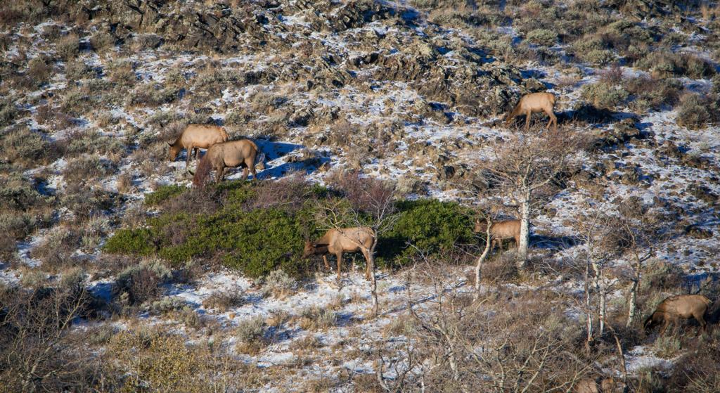 wyoming elk hunt