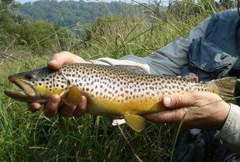 httpswww.outdoorlife.comsitesoutdoorlife.comfilesimport2014importImage2007legacyoutdoorlife140-33TroutBrown.jpg
