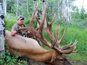 This is NOT the Next World Record Elk