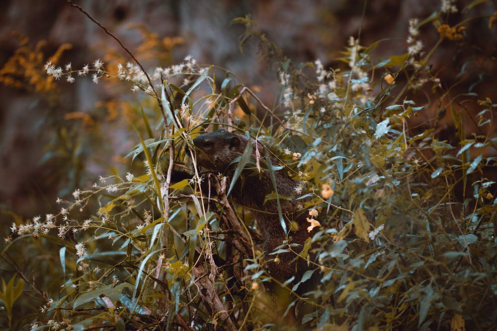 critter hiding in the weeds