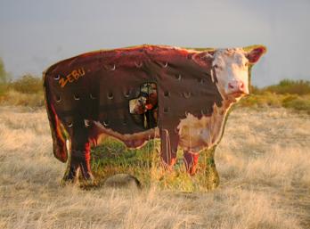 Crafty cow blind.