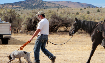 What You Can Learn at a Dog Field Trial to Become a Better Bird Hunter