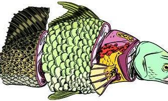 Summer Fishing Guide: 4 Grand Slams You've Never Heard Of