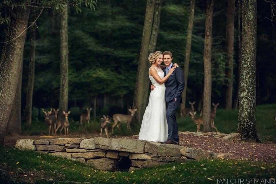 Herd of Deer Crash New Jersey Wedding