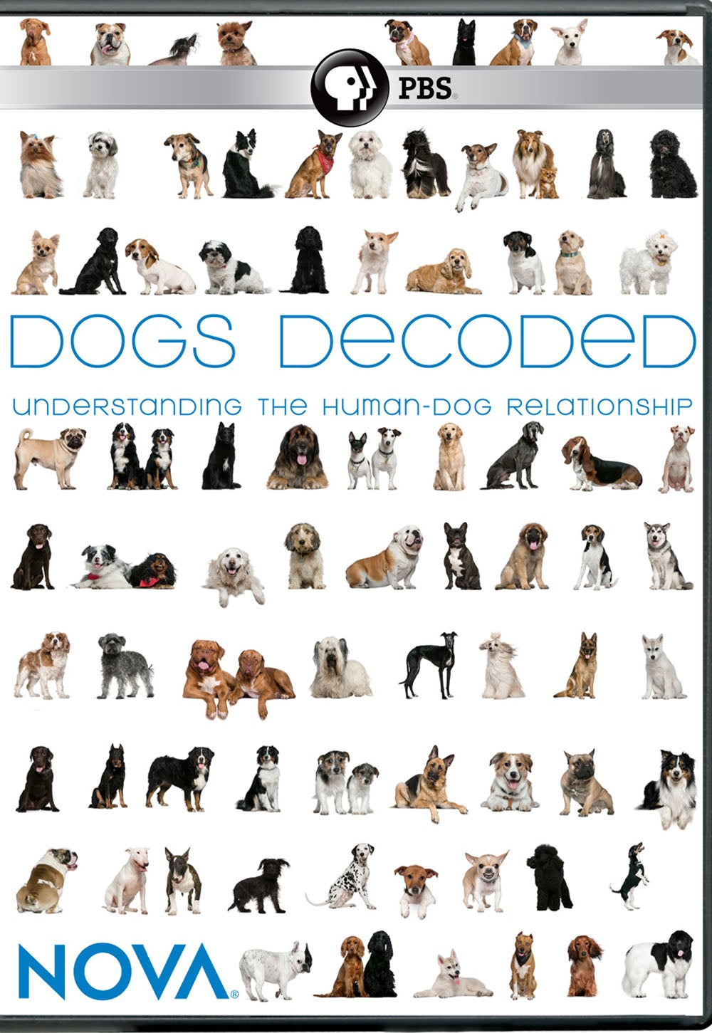 Dogs Decoded Unveils the Genetic Mysteries of Man's Best Friend