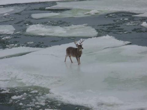 httpswww.outdoorlife.comsitesoutdoorlife.comfilesimport2013images20101211_25_Ice_Flow_Buck_4_0_0.jpg