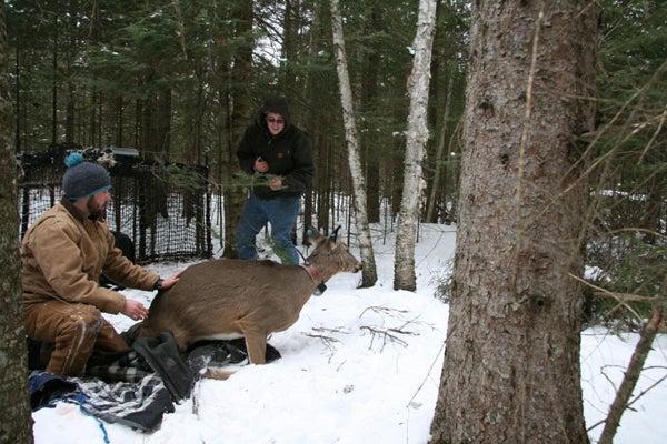 httpswww.outdoorlife.comsitesoutdoorlife.comfilesimport2014importImage2011photo100132157913_Deer01_NS.jpg