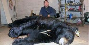 World Record Bear?