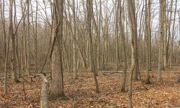 The Micro Manager: Turning 17 Acres into Whitetail Hunting Paradise