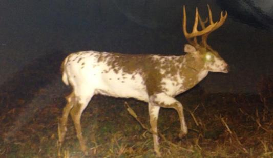 Virginia Hunter Takes Monster Piebald Buck