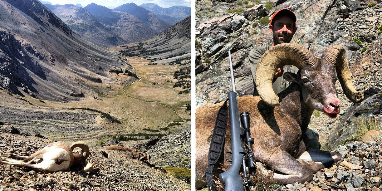 Chance of a Lifetime: You Could Still Hunt Bighorn Sheep This Season
