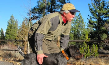Gun Dog Training Tips: Regulate Tone and Volume of Commands