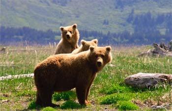 httpswww.outdoorlife.comsitesoutdoorlife.comfilesimport2014importImage2007legacyoutdoorlivegame226.jpg