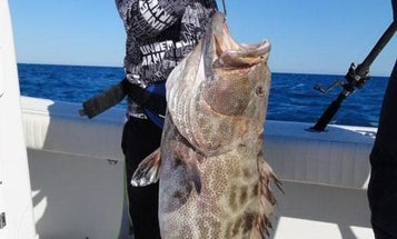 10-Year-Old Boy Catches World Record Black Grouper