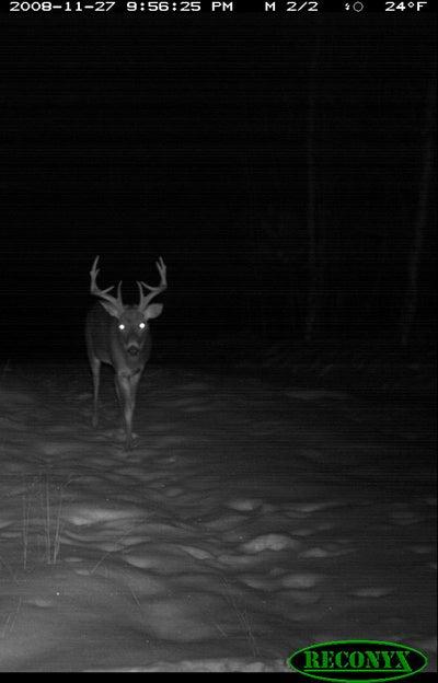 Weekend Deer Report