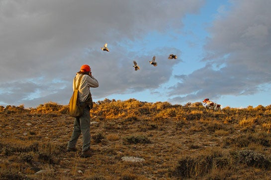 Cast and Blast: Sage Grouse Hunting and Trout Fishing in Wyoming