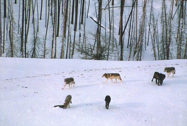 httpswww.outdoorlife.comsitesoutdoorlife.comfilesimport2013images20100814_national_park_service_3_0.jpg
