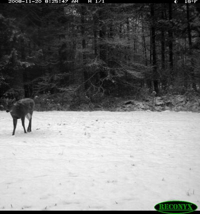 httpswww.outdoorlife.comsitesoutdoorlife.comfilesimport2014importImage2008legacyoutdoorlife125-dec1_deer_forecast_6.JPG