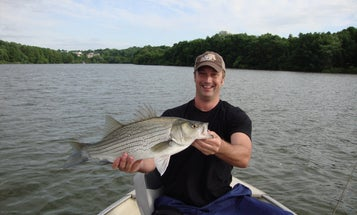 Fishing Tips: 3 Ways to Score on Summer Hybrid Stripers