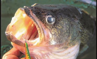 5 Tips for Dirty-Water Walleyes