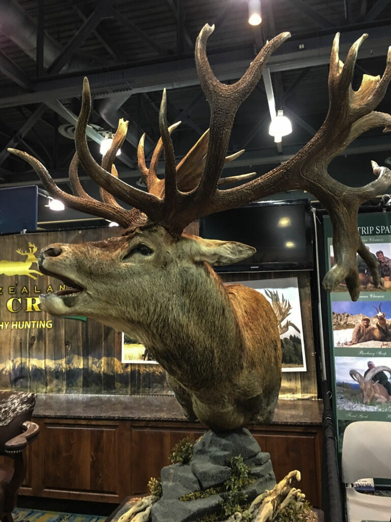 record stag mount