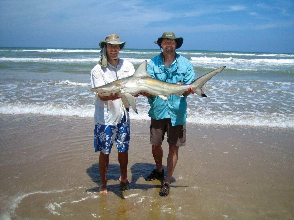 surf-caught shark