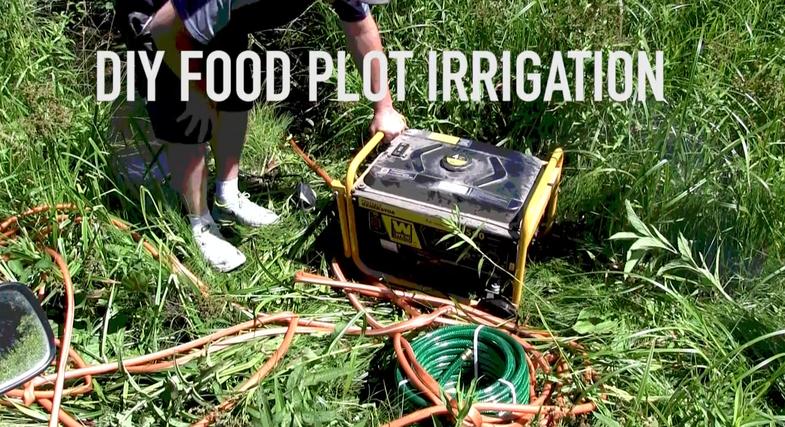 food plots