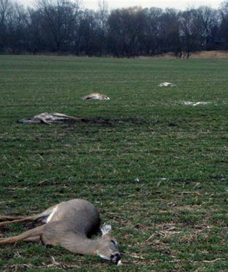 Lightning Strikes a Herd of Deer