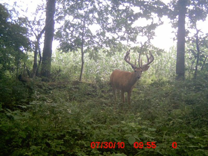 httpswww.outdoorlife.comsitesoutdoorlife.comfilesimport2014importImage2011photo1001321579Trial_Cam_2010.jpg