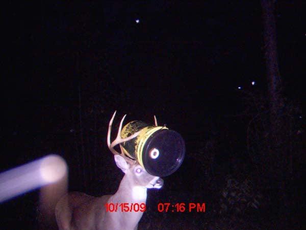 Buck-et Head