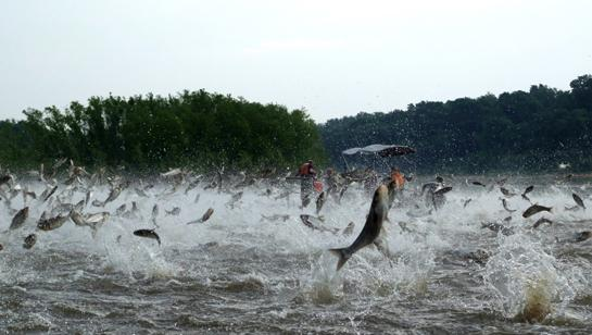 $9.5 Billion Project Proposed to Stop Asian Carp