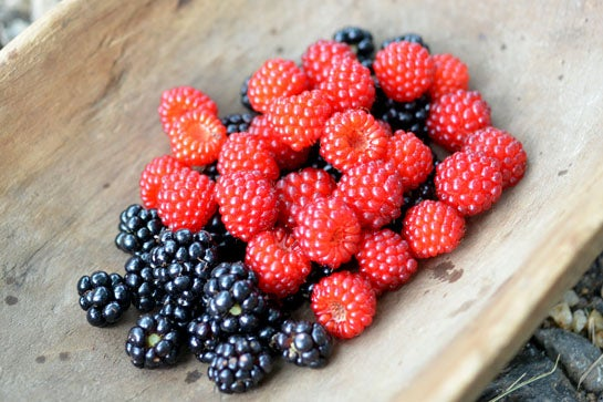 Survival Skills: 5 Cool Uses for Summer Berries