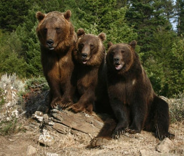 Man Killed While Cleaning Grizzly Cage in Montana