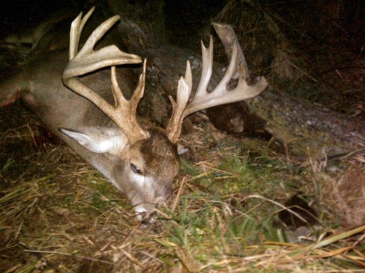Monsters of the Rut: Iowa Bruiser