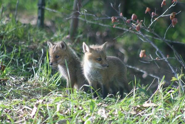 httpswww.outdoorlife.comsitesoutdoorlife.comfilesimport2013images201006IMG_1705_0.jpg