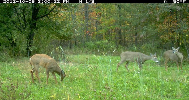 Rut Tracker 2012: Trail Camera Photos October 25