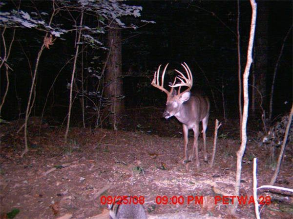 httpswww.outdoorlife.comsitesoutdoorlife.comfilesimport2014importImage2009photo715_NC_Giant__buck_0.jpg
