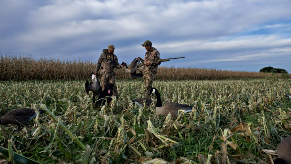 two hunters testing geese decoys