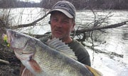 Another Illinois State-Record Walleye Caught on the Pecatonica River