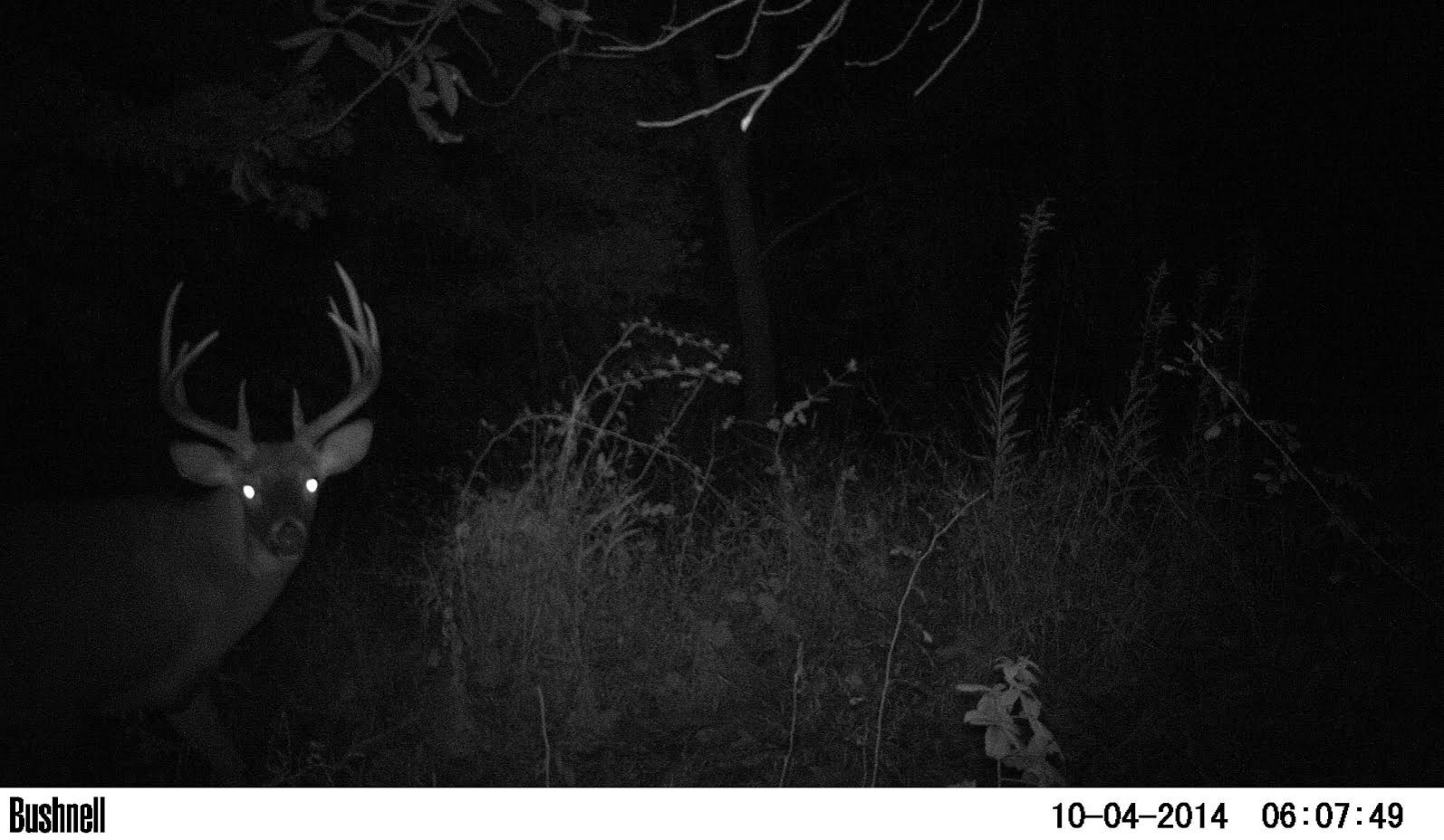 Whitetail Deer: How to Hunt the October Shift
