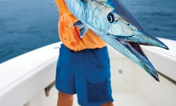3 Strategies for Catching More Winter Wahoo