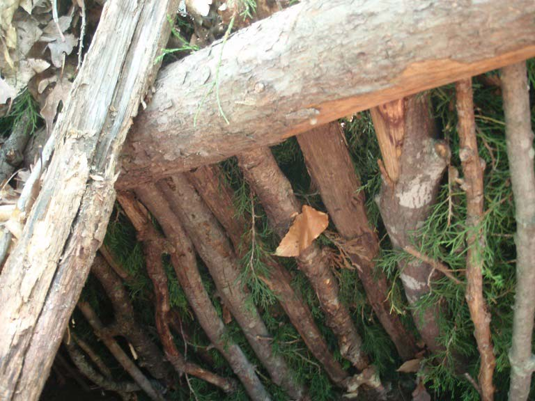 a lean to survival skills