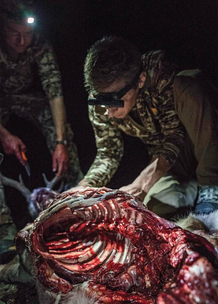 field dressing a mexico coues deer